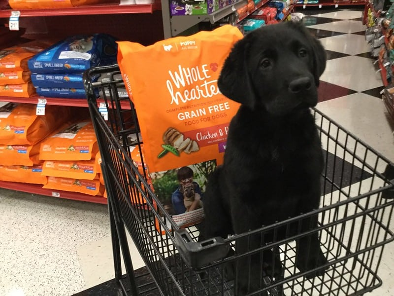A dog and a bag of dog food in a shopping cart