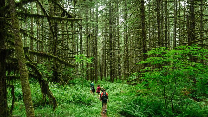 Rucking vs Hiking: People hiking in the forest