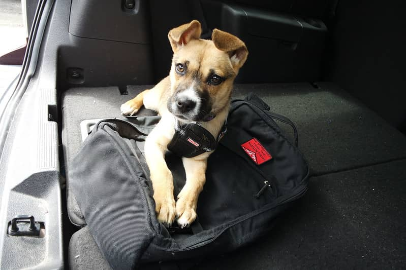 Dog on top of a rucksack